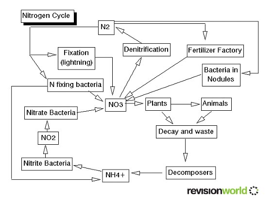 Nitrogen cycle diagram black and white wiring library carbon the carbon cycle and nitrogen cycle biology gcse revision phosphate cycle diagram nitrogen cycle diagram black and white ccuart Choice Image